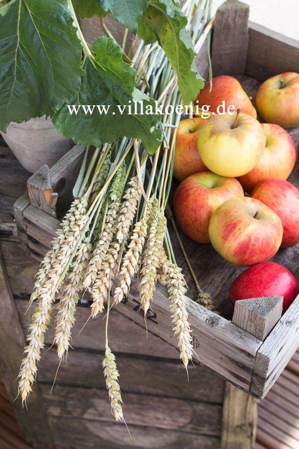 Äpfel und Roggen in alter Holzkiste dekoriert