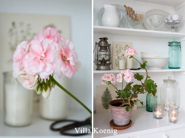 Villa Koenig Blog Geranie