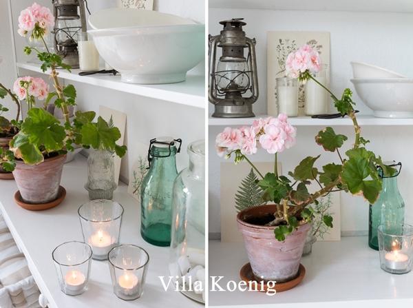 Villa Koenig Blog Geranien