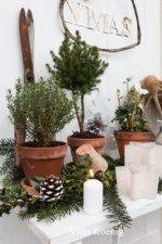 Tannenbaum Draußen Schmücken.Ein Tannenbaum Im Paket Villa König